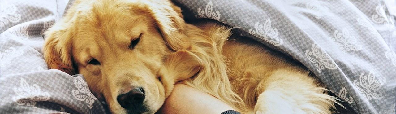 Dog Pet Hotel Growth