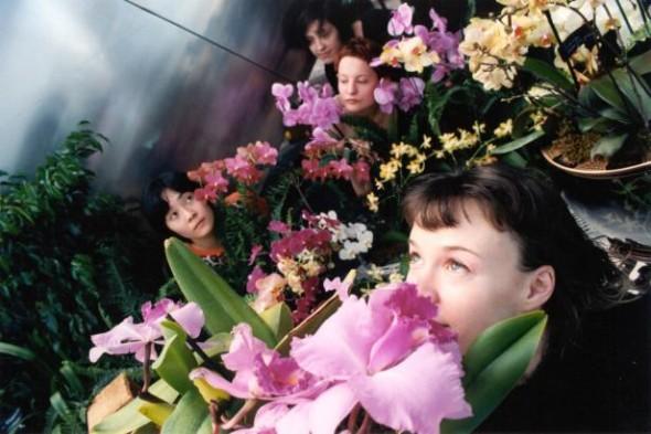 Orchid fests