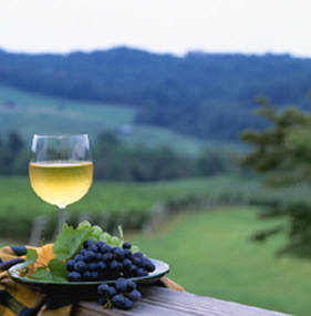 Best Winery Tours In Northern Va