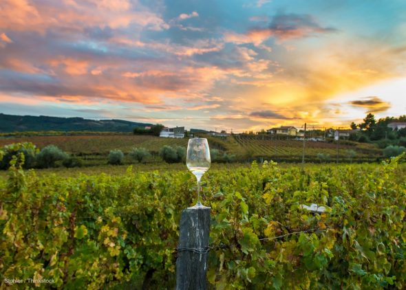 Napa Valley Vacation Packages With Wine Tours