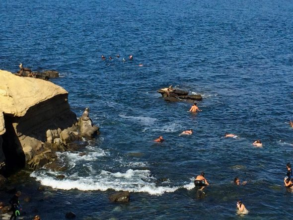 Where to swim with seals in southern California