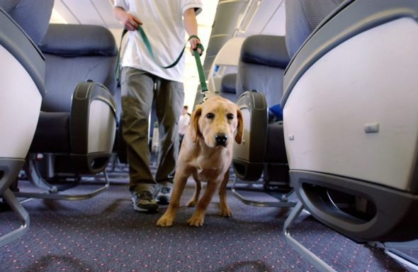 rules for pets on planes