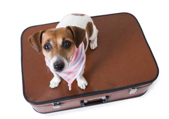 pet travel in the U.S.