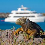 Best-Galapagos-Cruises-728x485-590x393.jpg