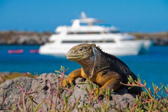 Best-Galapagos-Cruises-728x485-590x393.jpg