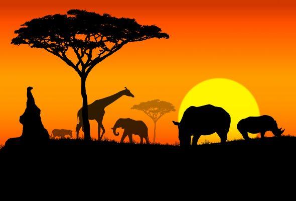africa-590x400.jpg