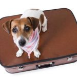 dog-on-bag-800-590x417.jpg