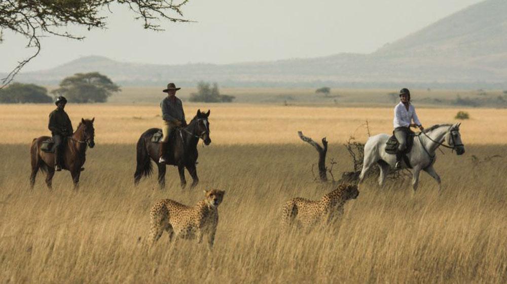 Great Plains Conservation