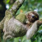 Costa rica adventures tours