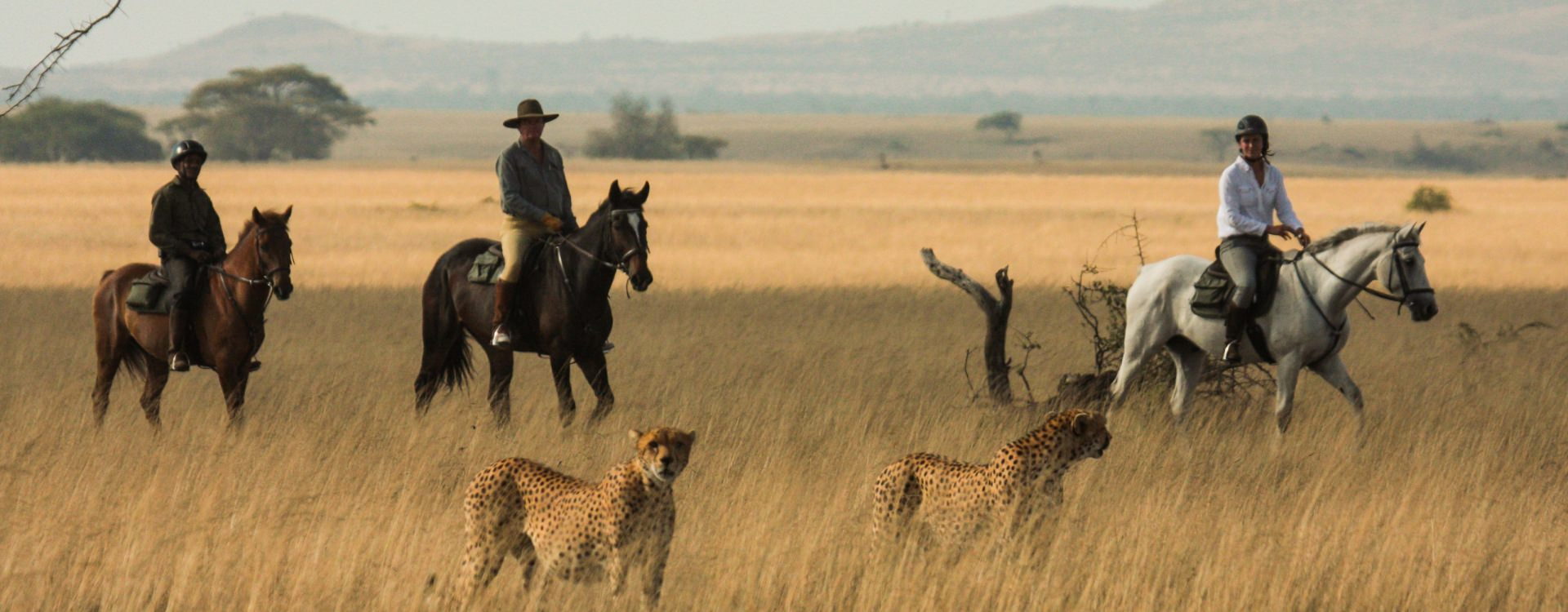 Safari in Africa