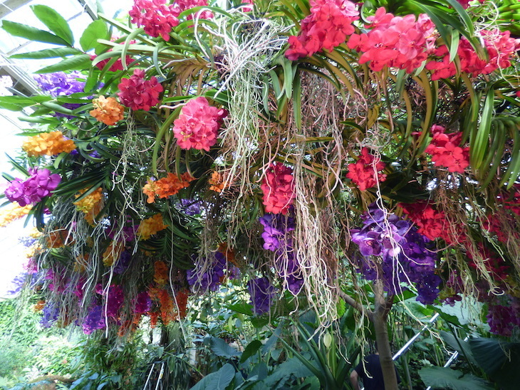 London Flower Festivals